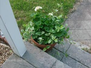 garden blgo 002