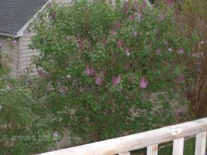 gardening blog 001