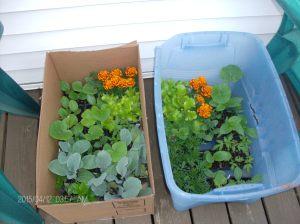gardening blog 002