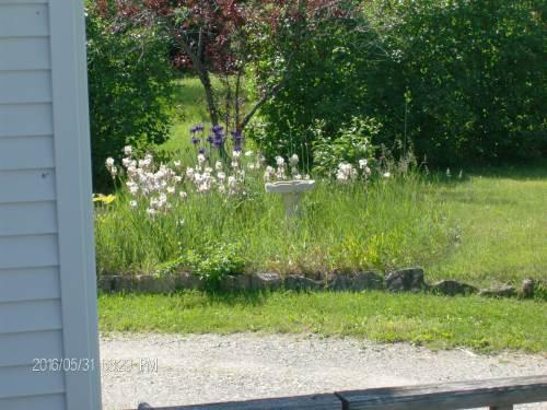 gardens 002